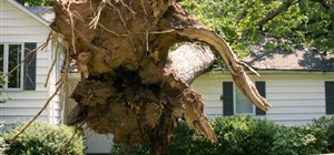How Does the Storm Damage Restoration Process Work?