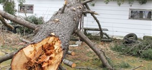 What You Need to Know About Getting Storm Damage Repairs